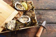 Caja de madera de ostras frescas con un cuchillo que desvaina imagen de archivo