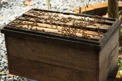 Caja de madera natural de la abeja Imágenes de archivo libres de regalías