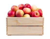 Caja de madera por completo de manzanas frescas aisladas Fotografía de archivo libre de regalías