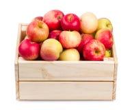 Caja de madera por completo de manzanas frescas aisladas fotografía de archivo
