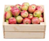 Caja de madera por completo de manzanas frescas aisladas en un blanco Imagen de archivo libre de regalías