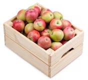 Caja de madera por completo de manzanas frescas aisladas en un blanco Foto de archivo libre de regalías