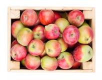 Caja de madera por completo de manzanas frescas aisladas en un blanco Fotografía de archivo libre de regalías