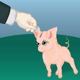 Caja de moneda feliz del cerdo Imágenes de archivo libres de regalías