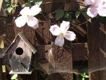 Caja de pájaro con el web de arañas Foto de archivo
