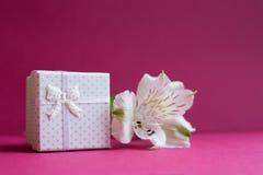 Caja de regalo blanca con la sola flor del alstroemeria en backgr carmesí Imagenes de archivo