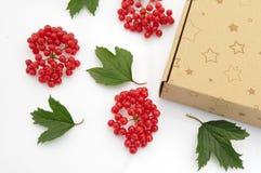 Caja de regalo con el viburnum de las bayas Fotografía de archivo libre de regalías