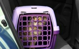Caja del portador con el gato imagen de archivo