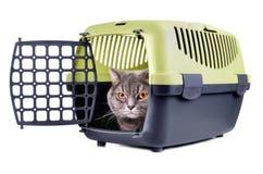 Caja del portador con el gato Imágenes de archivo libres de regalías