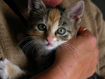 Caja fuerte del gatito con la mama Fotografía de archivo