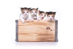 Caja linda de gatitos para arriba para la adopción Imágenes de archivo libres de regalías