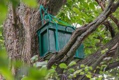 Caja-trampa de madera verde para las abejas salvajes o para las abejas el pulular en el árbol Fotos de archivo