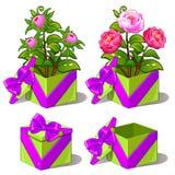 Caja verde del regalo con las peonías rosadas Flor del vector Fotos de archivo libres de regalías