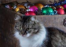 Caja vieja con decoraciones de la Navidad y un gato Imagenes de archivo