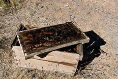 Caja vieja de la miel en el desierto Fotos de archivo libres de regalías