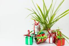 Caja y árbol de regalo de la Navidad en pote en el fondo blanco Imagen de archivo