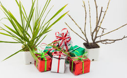 Caja y árbol de regalo de la Navidad en pote en el fondo blanco Imágenes de archivo libres de regalías