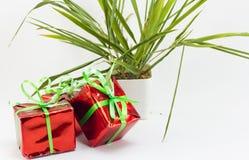 Caja y árbol de regalo de la Navidad en pote en el fondo blanco Imagenes de archivo