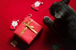Caja y gato rojos de regalo Foto de archivo libre de regalías