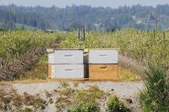 Cajas comerciales de la abeja Fotos de archivo libres de regalías