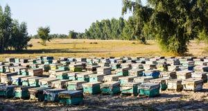 Cajas de la abeja Fotos de archivo libres de regalías