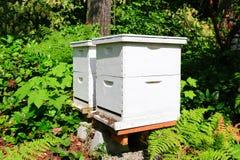 Cajas de la abeja para los apicultores Foto de archivo