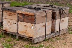 Cajas de la abeja usadas para polinizar una huerta de la almendra Fotos de archivo