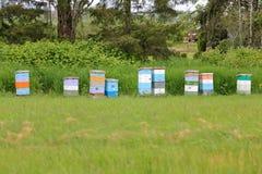 Cajas de la colmena en zona rural Imagenes de archivo