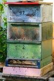 Cajas de madera de la colmena del vintage Foto de archivo libre de regalías