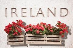Cajas de madera de las flores contra una pared de piedra vieja con la palabra Fotografía de archivo libre de regalías