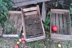 cajas de madera y manzanas vacías en hierba Imágenes de archivo libres de regalías