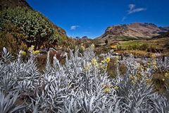 Cajas National Park Azuay Ecuador South America Stock Photo