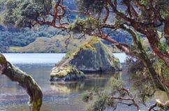 Cajas nationalpark fotografering för bildbyråer