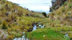Cajas nationalpark, Toreadora sjö, Ecuador arkivbilder