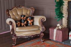 Cajas negras envueltas del regalo con las cintas como regalos de Navidad en una silla Foto de archivo libre de regalías