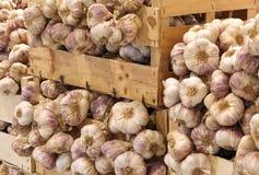 Cajas por completo de muchos clavos del ajo en vender al por mayor Imágenes de archivo libres de regalías