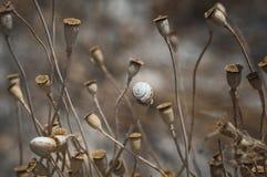 Cajas y caracol - todavía vida de la semilla de amapola Imágenes de archivo libres de regalías