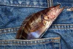 cajg rybia kieszeń Obrazy Stock