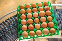 Cajón del transporte de banda transportadora con los huevos frescos Imagen de archivo libre de regalías