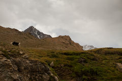 Cajon del Maipo, Chili Images libres de droits