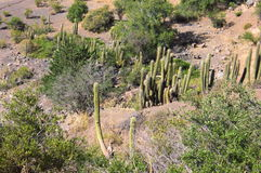 Cajon del Maipo - Chili - XXVII - Stock Afbeelding