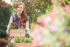 Cajones con las flores rosadas fotografía de archivo libre de regalías