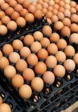 Cajones plásticos con los huevos blancos y marrones frescos Imagen de archivo libre de regalías