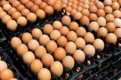 Cajones plásticos con los huevos blancos y marrones frescos Imagen de archivo