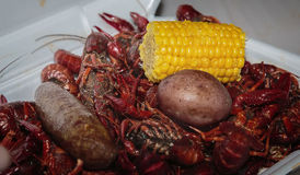 Cajun Cooked crawfish and shrimp boil in ice chest. Crawfish at crawfish boil in ice chest Royalty Free Stock Images