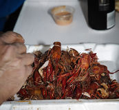 Cajun Cooked crawfish and shrimp boil in ice chest Stock Image