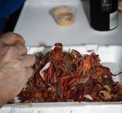 Cajun a fait cuire l'ébullition d'écrevisses et de crevette dans le coffre de glace Image stock