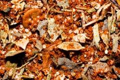 Cajun kryddasmaktillsats Fotografering för Bildbyråer
