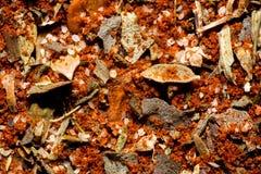 Cajun kryddasmaktillsats Royaltyfri Foto