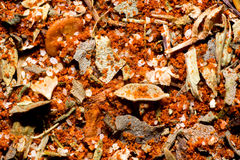 Cajun spice seasoning Stock Image